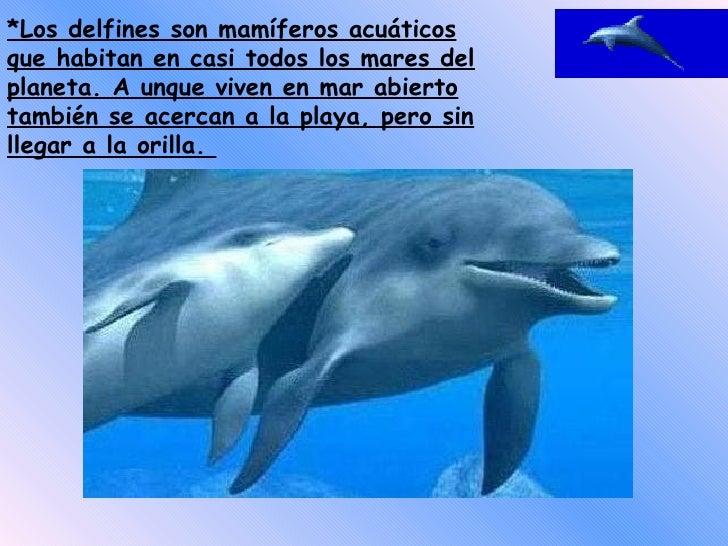 *Los delfines son mamíferos acuáticos que habitan en casi todos los mares del planeta. A unque viven en mar abierto tambié...