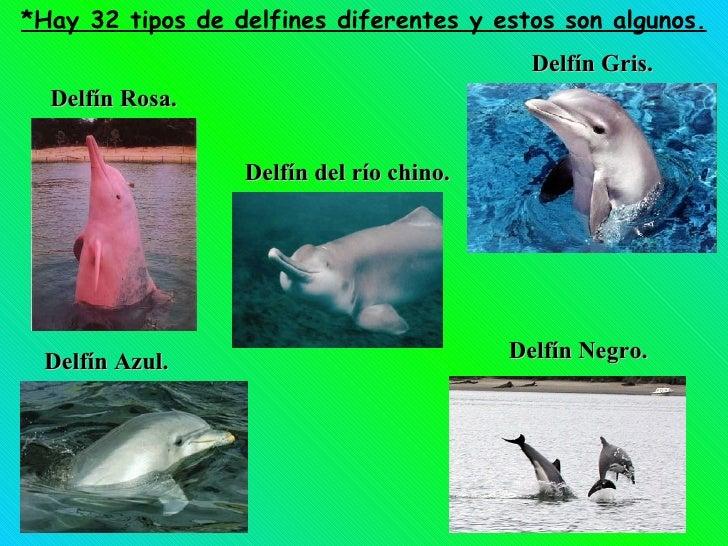 *Hay 32 tipos de delfines diferentes y estos son algunos. Delfín Rosa. Delfín Negro. Delfín Azul. Delfín Gris. Delfín del ...