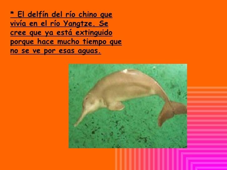 * El delfín del río chino que vivía en el río  Yangtze. Se cree que ya está extinguido porque hace mucho tiempo que no se ...