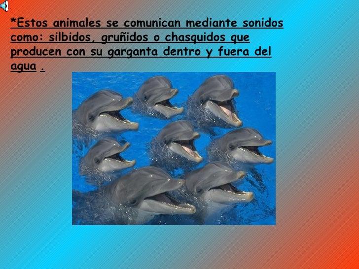*Estos animales se comunican mediante sonidos como: silbidos, gruñidos o chasquidos que producen con su garganta dentro y ...