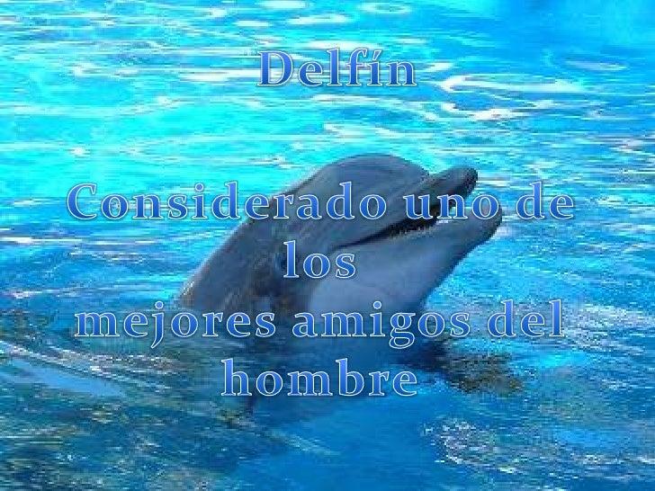 Delfín<br />Considerado uno de los mejores amigos del hombre<br />