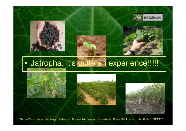 00:00:20  • Jatropha, it's quite an experience!!!!!  Ab van Peer, Global Knowledge Platform for Sustainable Solutions for ...