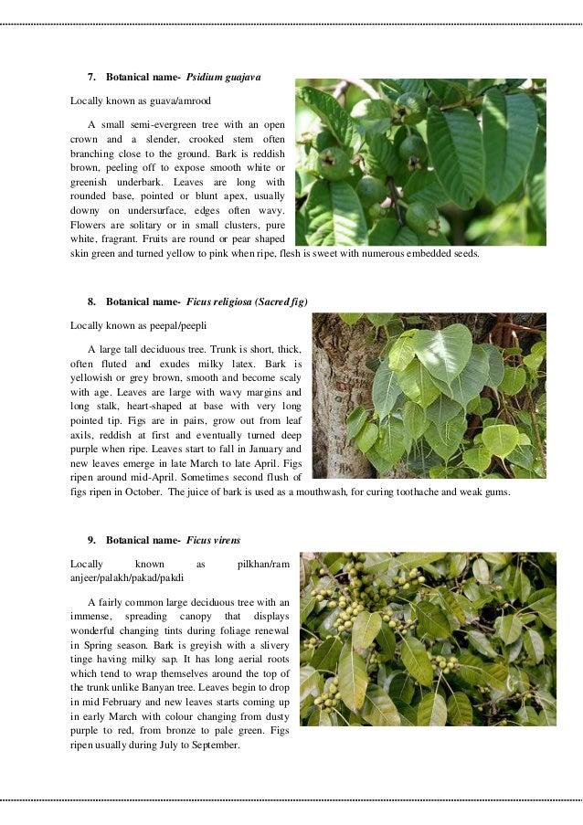 Delhi Trees Information