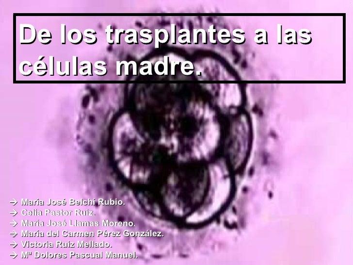 De los trasplantes a las células madre.    María José Belchí Rubio.    Celia Pastor Ruiz.    María José Llamas Moreno. ...