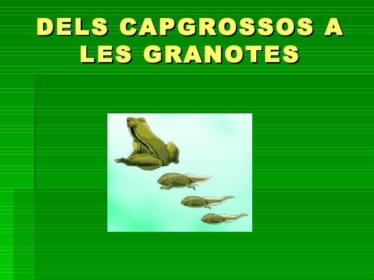 DELS CAPGROSSOS A  LES GRANOTES