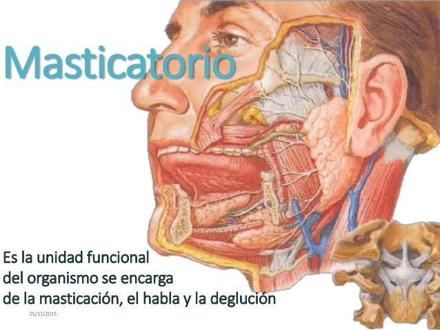 biomecanica del sistema masticatorio Slide 2