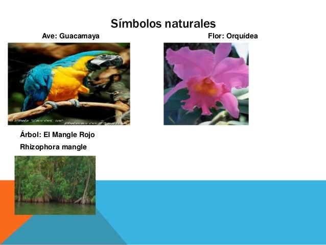 Simbolos Naturales Del Estado Delta Amacuro   delta amacuro