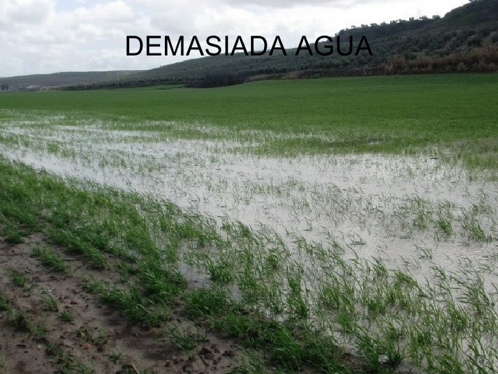 DEMASIADA AGUA