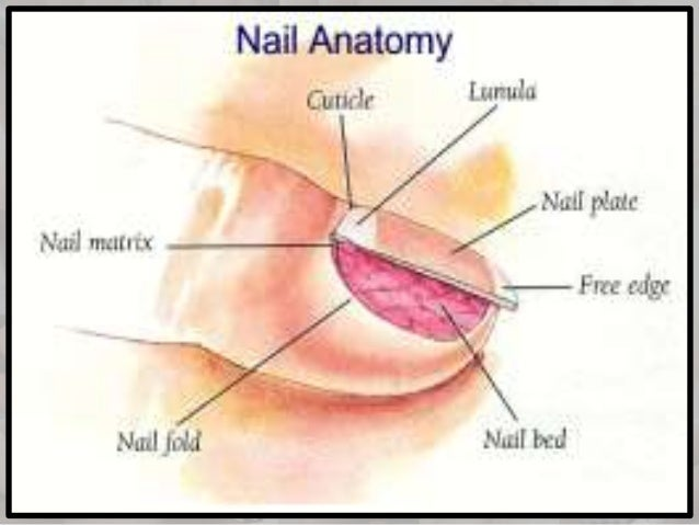 Nail Art Video OEasy Dotting Tool