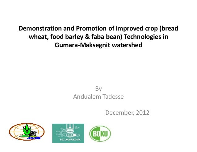 Demonstration and Promotion of improved crop (bread  wheat, food barley & faba bean) Technologies in           Gumara-Maks...