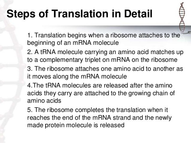 steps in protein synthesis The translation process is divided into three steps: the large subunit joins the small one to form a complete ribosome and the protein synthesis is initiated.