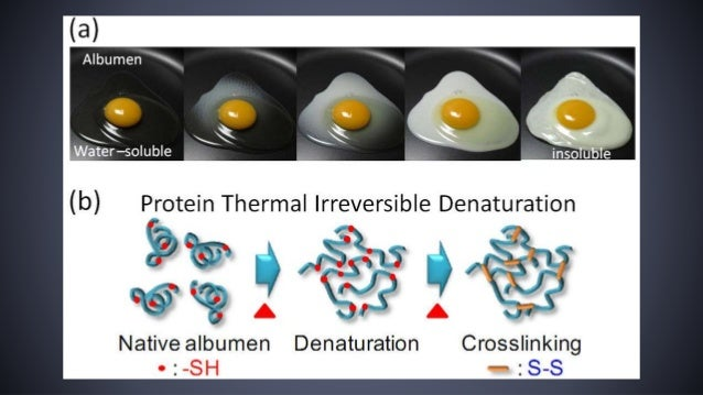 denaturation of protein