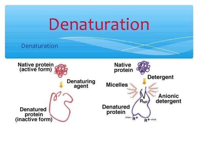 denaturering af proteiner