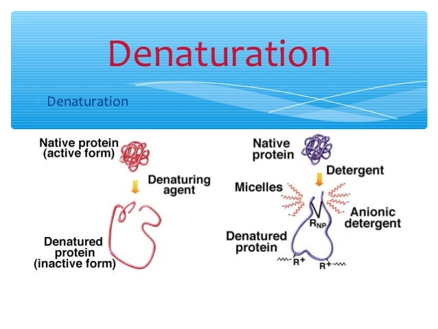 denaturation denaturation 21