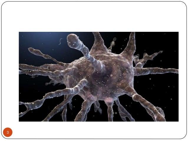 Dendritic cells Slide 3