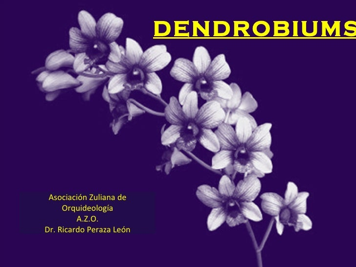 DENDROBIUMS Asociación Zuliana de Orquideología A.Z.O. Dr. Ricardo Peraza León