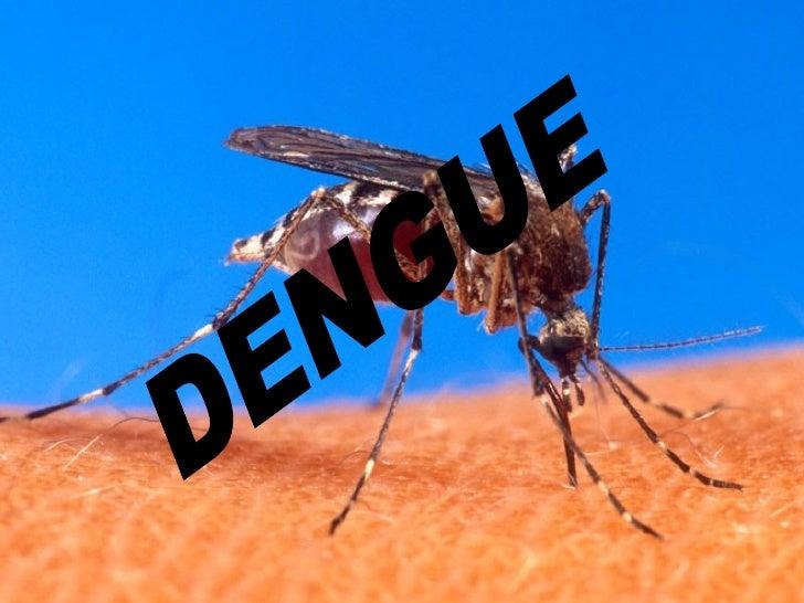 Dengue Slide 2