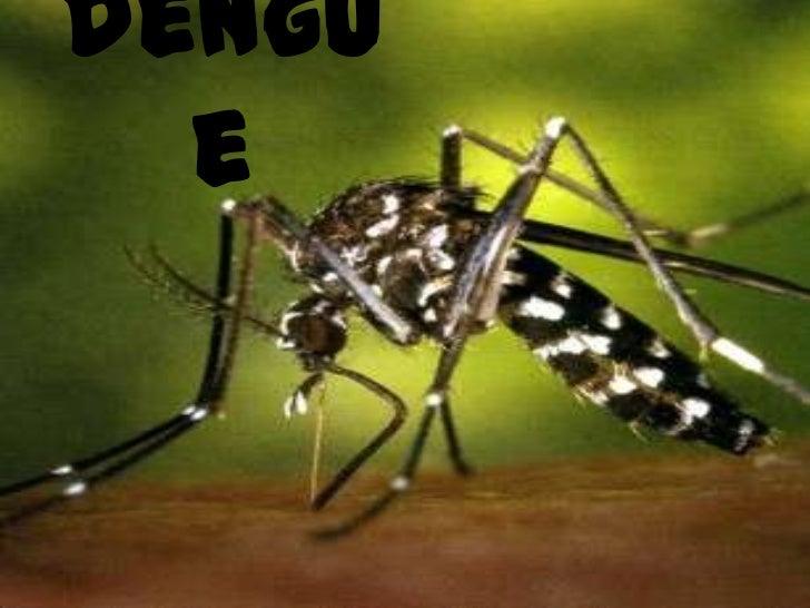 dengue<br />
