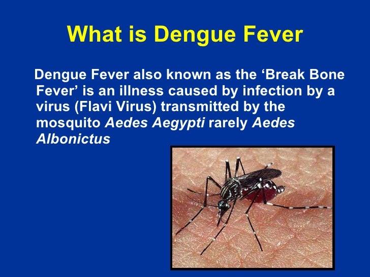 Dengue in Pakistan