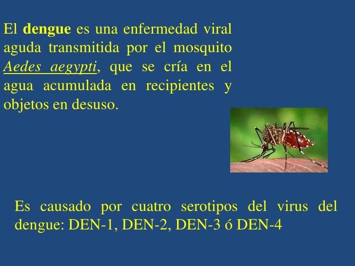 El dengue es una enfermedad viralaguda transmitida por el mosquitoAedes aegypti, que se cría en elagua acumulada en recipi...