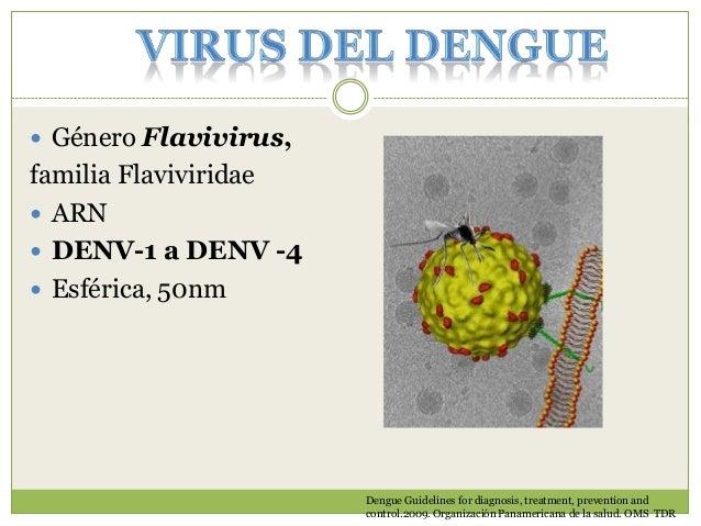 AEDES AEGYPTI  Huevos pueden sobrevivir hasta 1 año  Ciclo acuático 7-8 días  Dengue Guidelines for diagnosis, treatment...