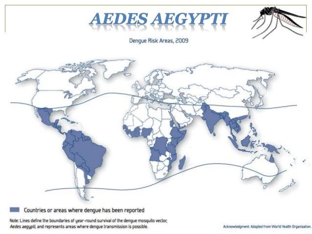 Virus circulando en sangre humana  Transmisión por picadura  Propagación sistémica 812 días  Ingiere mosquito hembra  Infe...