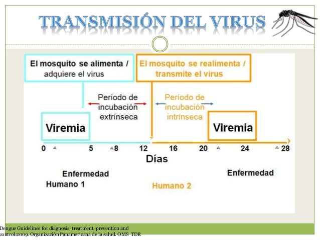 Infección viral  Virus infecta a macrófagos o cls dendríticas  Tejido  Cel endotelial Glicucálix  Vaso capilar  Cel T M y ...