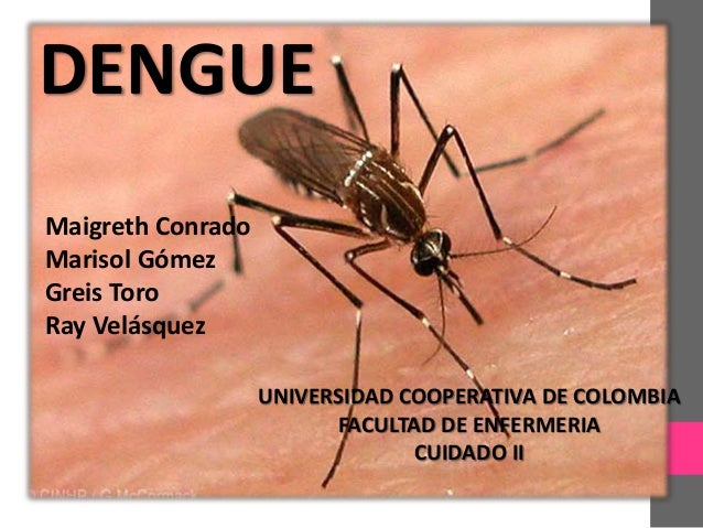 DENGUE Maigreth Conrado Marisol Gómez Greis Toro Ray Velásquez UNIVERSIDAD COOPERATIVA DE COLOMBIA FACULTAD DE ENFERMERIA ...