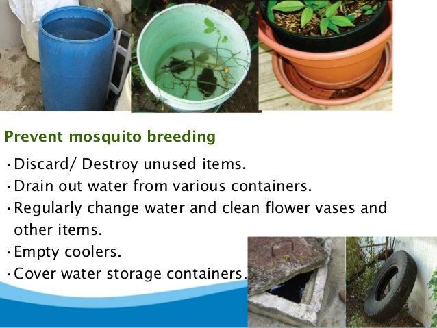 Dengue And Chikungunya Awareness