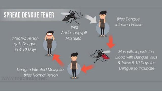 Ключевые симптомы