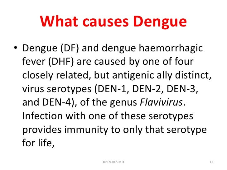 dengue fever and the immune system Dengue fever (df) and dengue hemorrhagic fever (dhf)  immune response  following denv infection were conducted by sabin (1952.