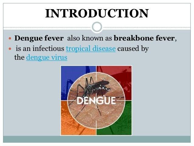Dengue fever ppt Slide 2
