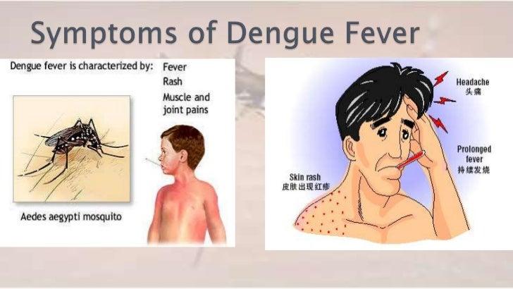 Dengue fever essay in urdu