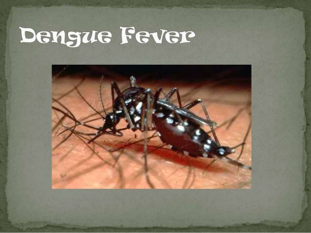  Dengue fever is a disease caused by a family of viruses that are transmitted by mosquitoes. It is an acute illness of su...