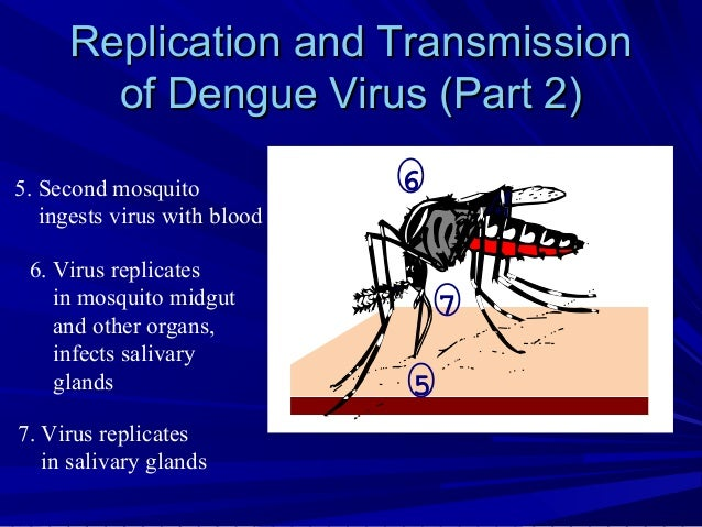 dengue virus in pakistan essay In subtropical and tropical regions, the dengue virus represents a major threat to human health the microorganism's natural hosts include mosquitoes, lower primates, and humans.