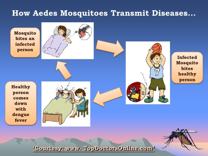 Ways to prevent dengue essay