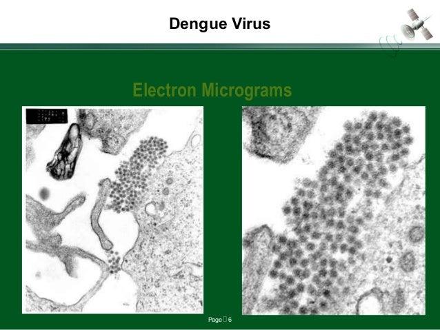 Page  6 Dengue Virus Electron Micrograms