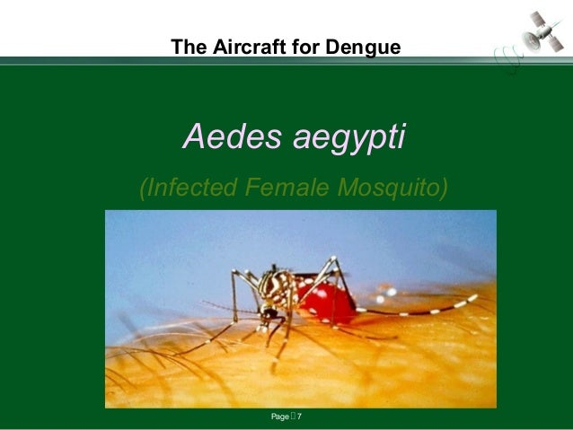 Page  7 The Aircraft for Dengue Aedes aegypti (Infected Female Mosquito)