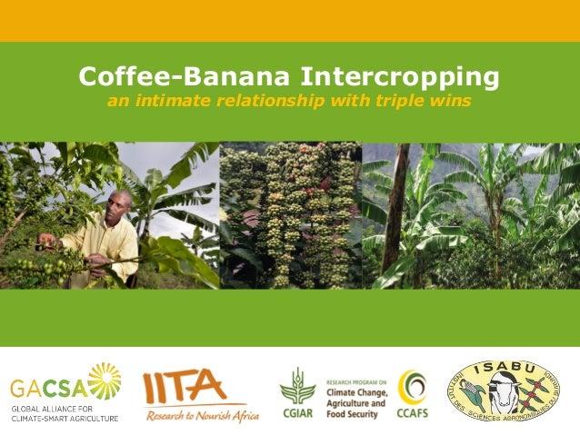 International Institute of Tropical Agriculture – Institut international d'agriculture tropicale – www.iita.org Piet van A...