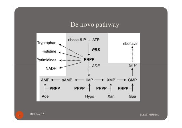 de novo and salvage pathway of purines