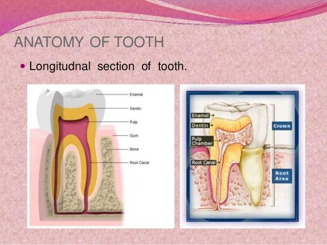 Dental hygiene and oral care Slide 3