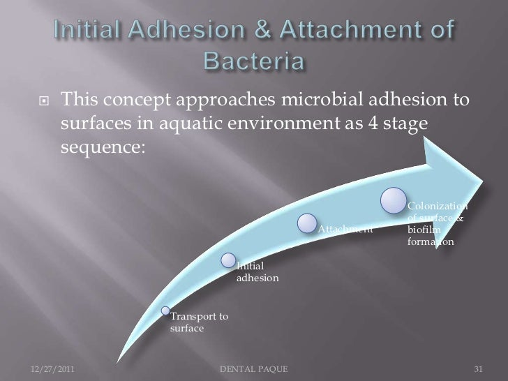     This concept approaches microbial adhesion to      surfaces in aquatic environment as 4 stage      sequence:         ...