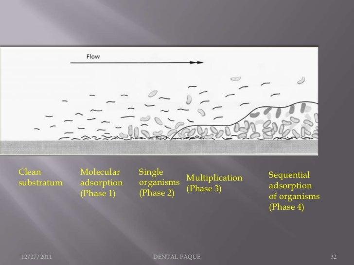 Clean        Molecular    Single                     Sequentialsubstratum   adsorption   organisms Multiplication   adsorp...