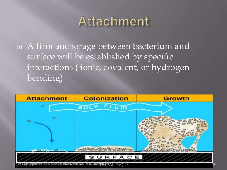     A firm anchorage between bacterium and      surface will be established by specific      interactions ( ionic, covale...