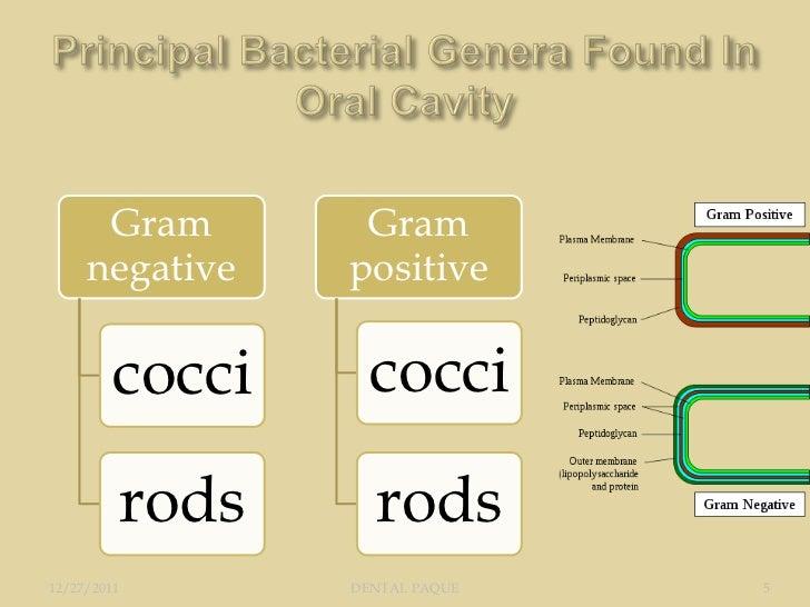 Gram        Gram     negative    positive         cocci     cocci         rods      rods12/27/2011       DENTAL PAQUE   5