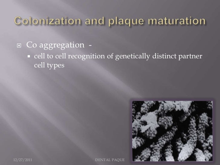     Co aggregation -            cell to cell recognition of genetically distinct partner             cell types12/27/201...