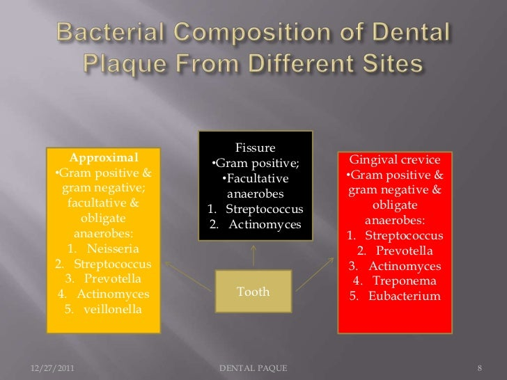 Fissure        Approximal       •Gram positive;    Gingival crevice     •Gram positive &      •Facultative    •Gram positi...