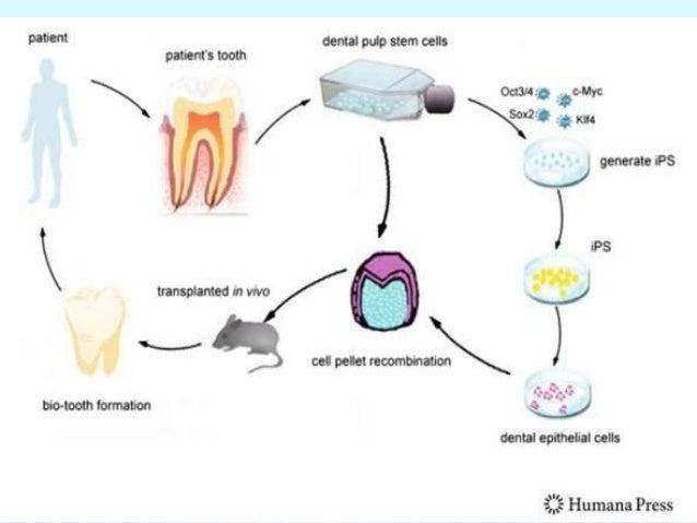 DENTAL STEM CELLS PDF DOWNLOAD