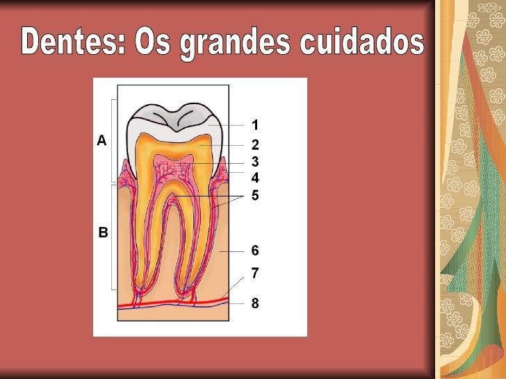 Dentes: Os grandes cuidados