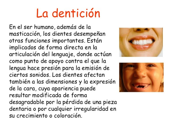 La dentición En el ser humano, además de la masticación, los dientes desempeñan otras funciones importantes. Están implica...